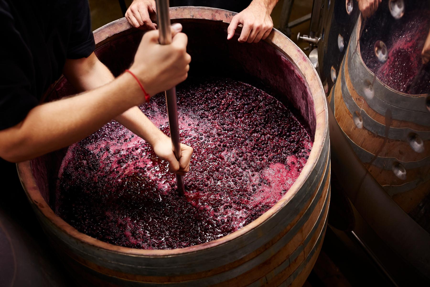 vino-web-small-2